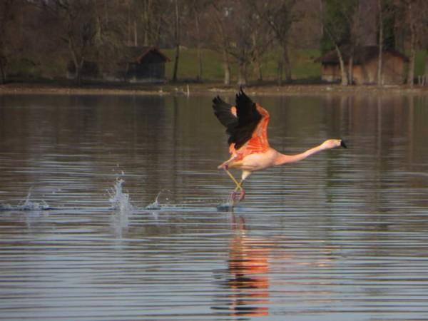 flamingos_2015_04
